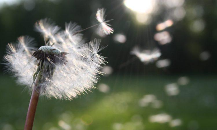 Hoe moet je reageren op een opdracht – deel 2/6: wensen